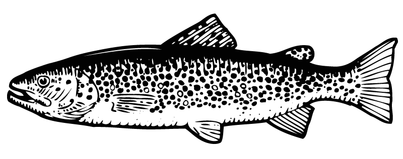 Bachforelle I Heimische Forellen Aus Tirol Tirol Fisch Tiroler Fischbauer